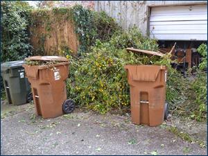 yard-junk-clean